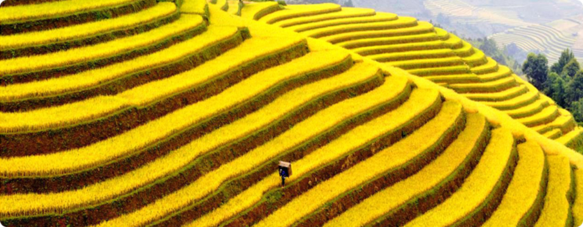 West-North-Areas_-Sapa-and-Terraced-Fields_2.jpg